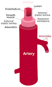arterja