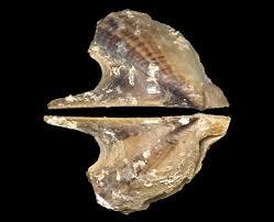 farfett-mollusk