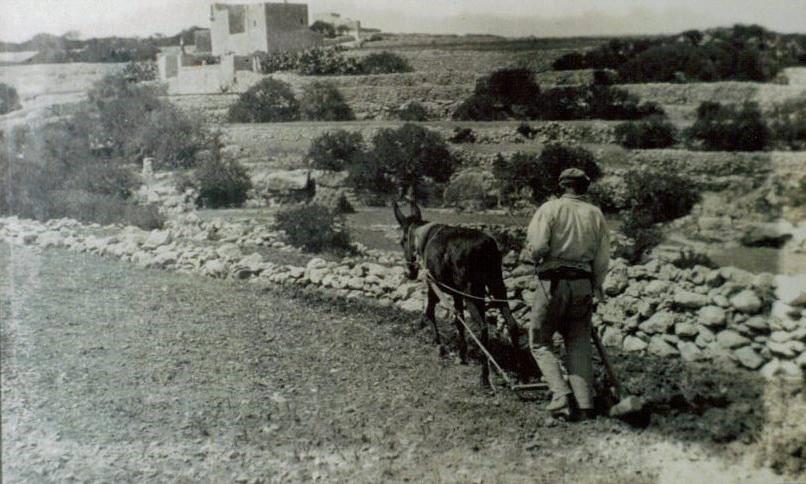 XOGĦOL IL-BIDWI:  F'JANNAR tal-1850